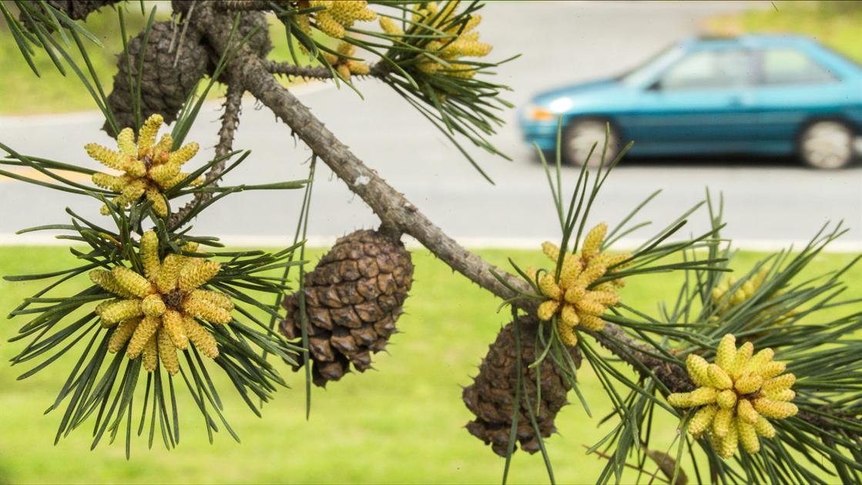 Wednesday's pollen count highest since 2015 | News | mdjonline com