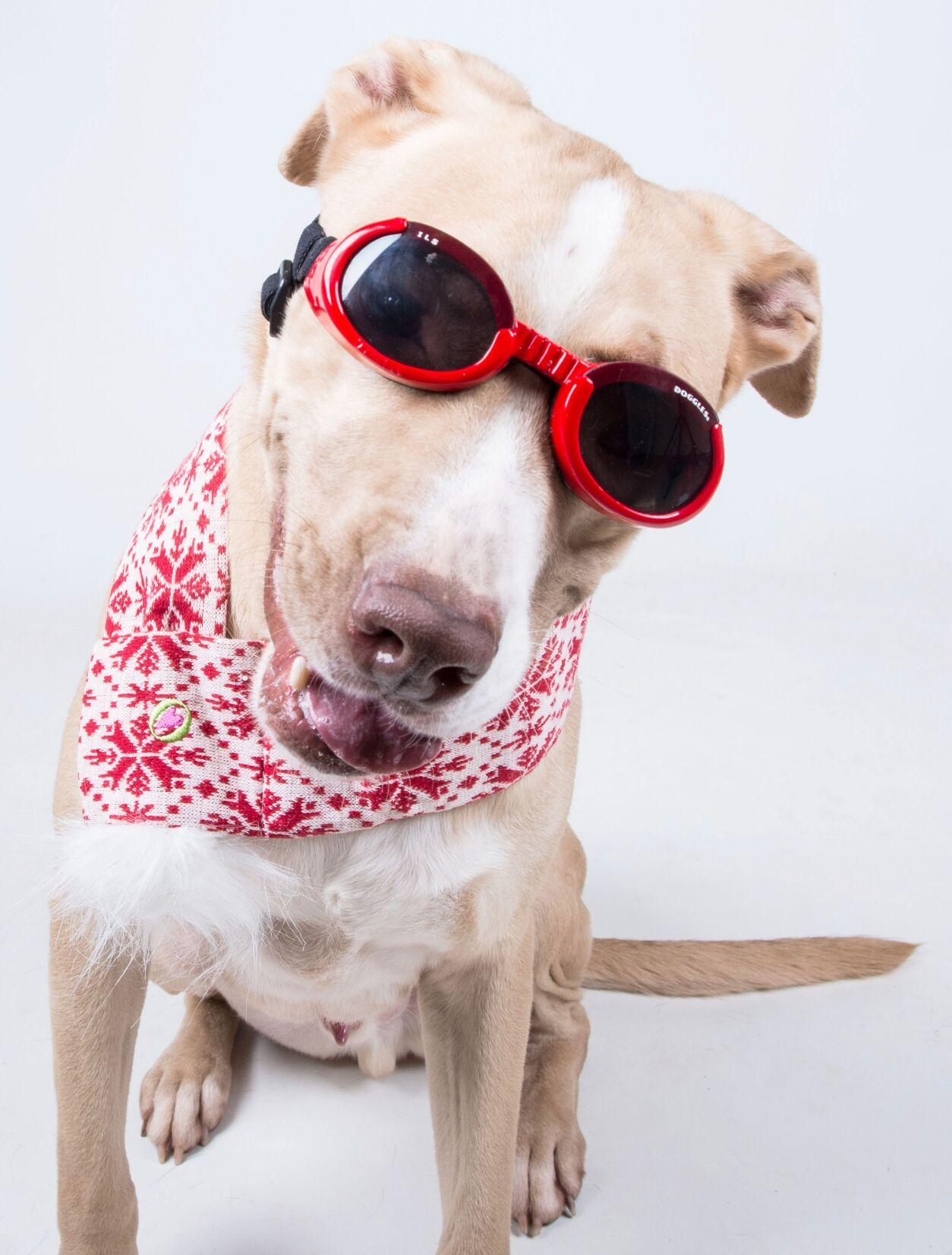 033121_MNS_LifeLine_spring_001 Wrigley the dog