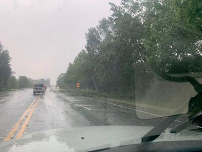 Downed tree on Martha Berry Highway