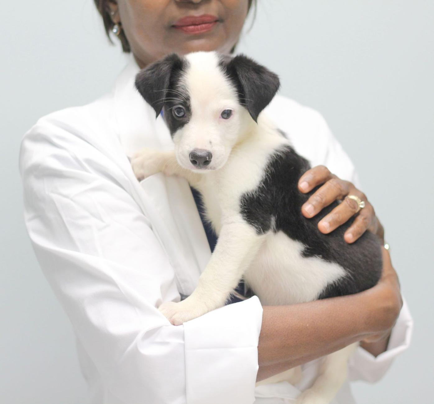 042220_MNS_AHS_foster_001 Gloria Dorsey with dog