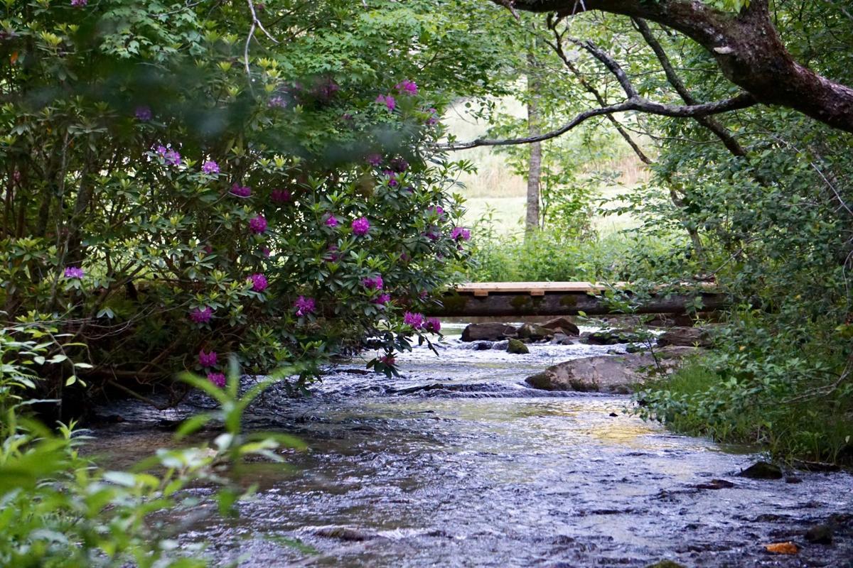creek with bridge.JPG