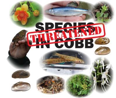 threatened-species.jpg