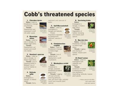 threatened-species-chart.jpg