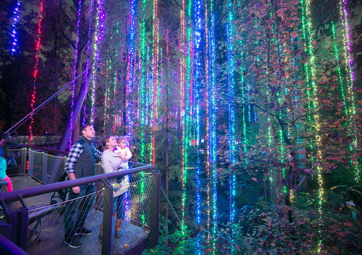 Images of Atlanta Botanical Garden Christmas Lights - All About ...