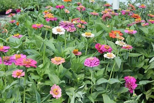 Farm Fresh Gardens has wide variety