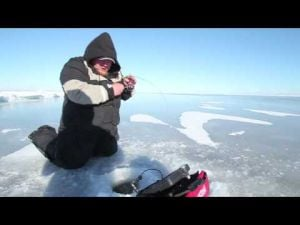 Mille Lacs Slot Walleyes