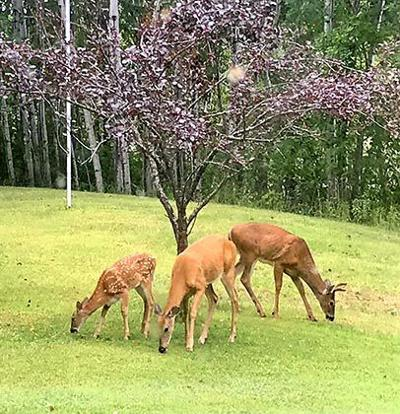 Jean Lemire took this photo the morning of Aug. 28, at her aunt Bebe Lemire's property on Hickory Lake.
