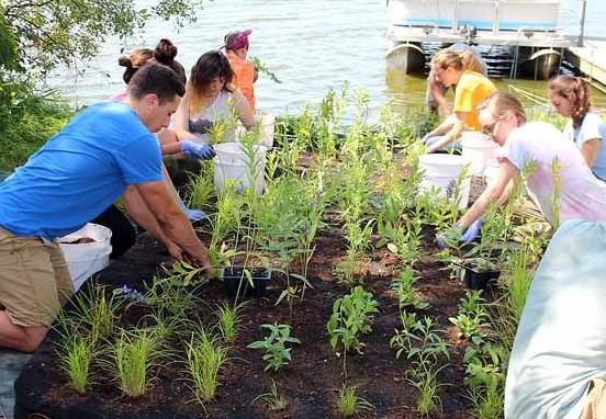 Volunteer students from the University of Minnesota prepare a floating island with native aquatic plants which was later put on Fleming Lake.