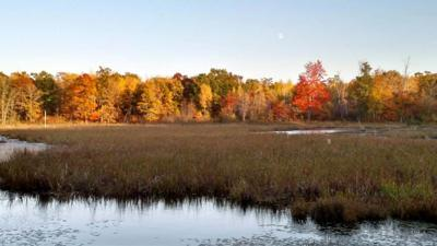 This marshy area of an Aitkin County lake is an example of wetlands.