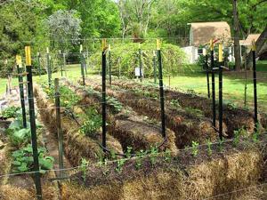 sample of a straw bale garden - Straw Bale Garden