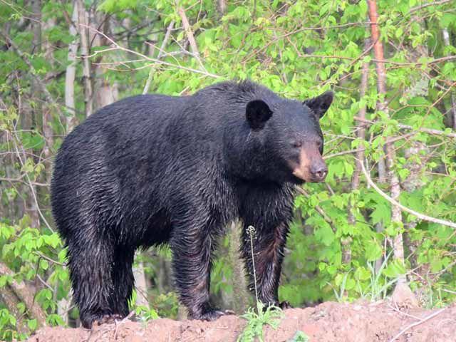 Bear by Steve Johnson