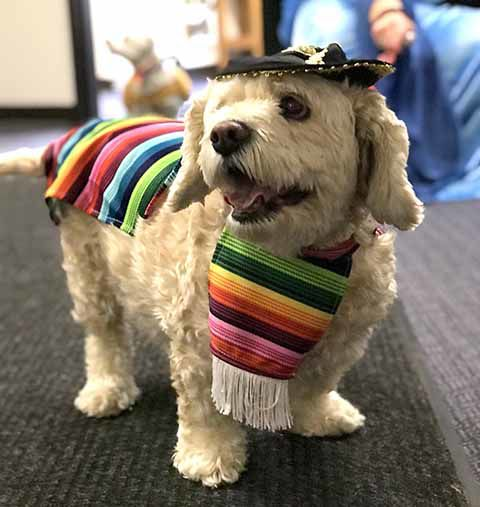 Doggie parade - Sparky