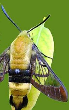 Hummingbird Natural Health