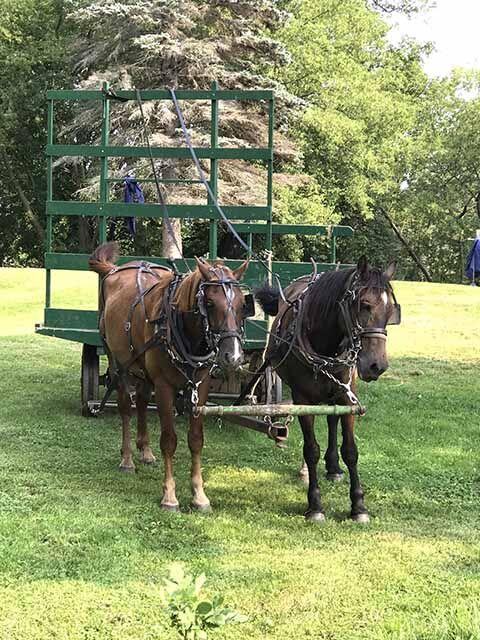 Amish - horses