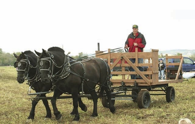 Conrad Thomsen with his Percheron work horses, Shade and Shadow.