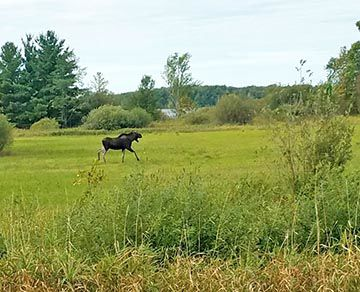 This moose was recently caught on camera near Fleming Lake by Jim Bright.