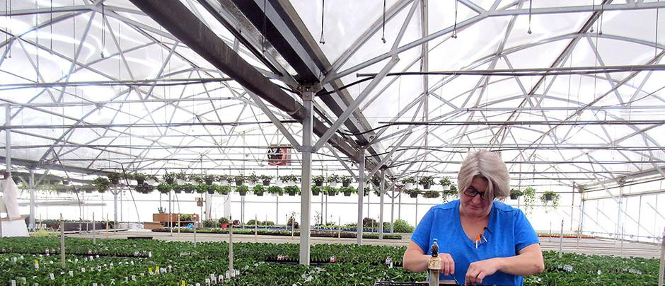 Shirley Fahrenholz tends to the plants at The Greenhouse.