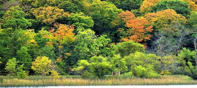 Mille Lacs Lake Watershed Management Group Topic of the Month - fall colors