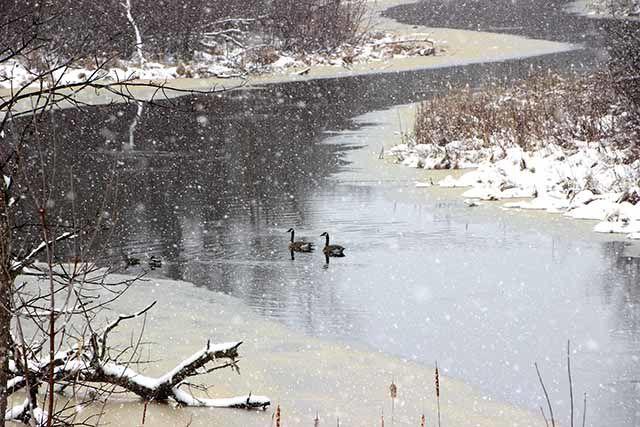 Winter wonderland, part II