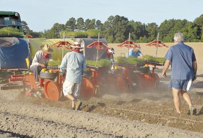 Local farmers add hemp to acreage