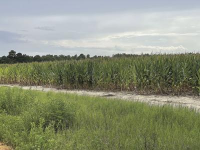 Extension agent shares crop update