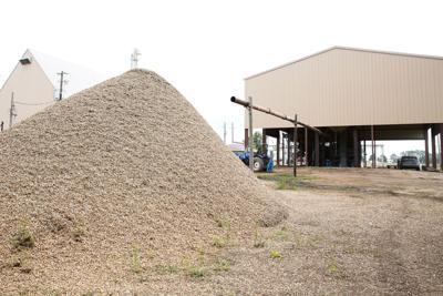 Piles of peanuts