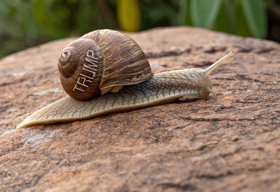 Like a garden slug, Trump's damage can spread