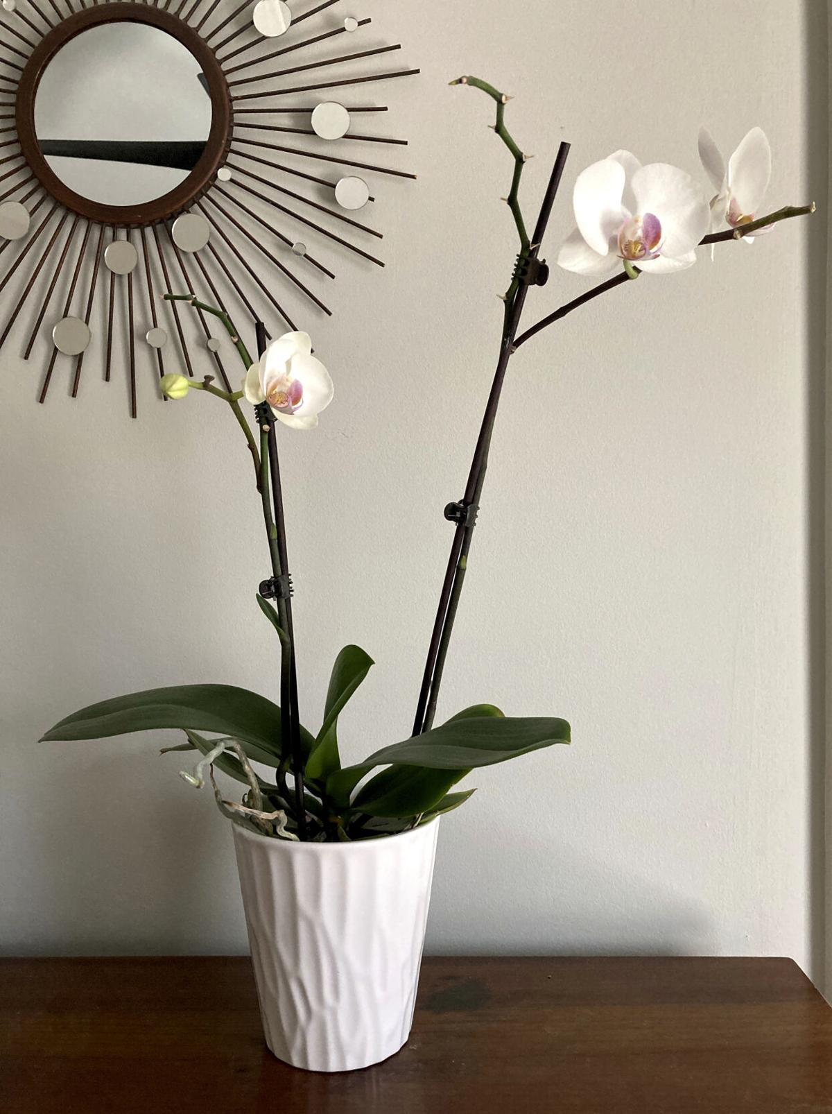 Gardening-Orchids Everywhere
