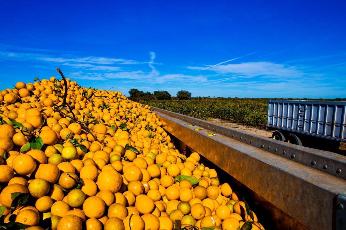 Florida Citrus.jpg