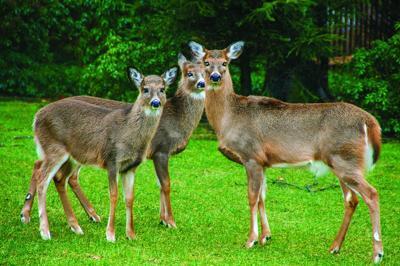 Help local wildlife