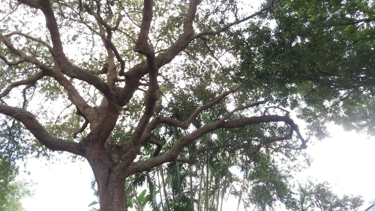 Trees in back garden