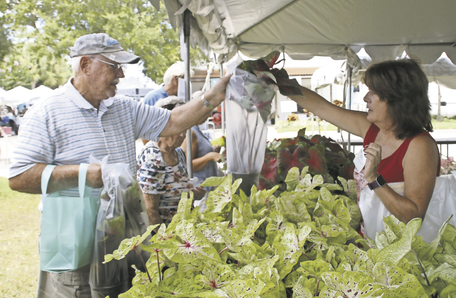 Teri Bates, right, sells caladium plants