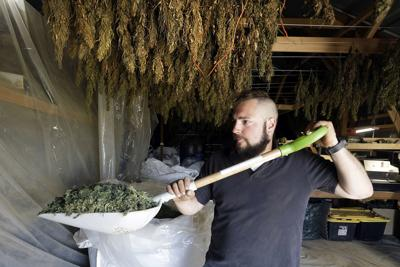 Hemp Regulations-Worried Growers