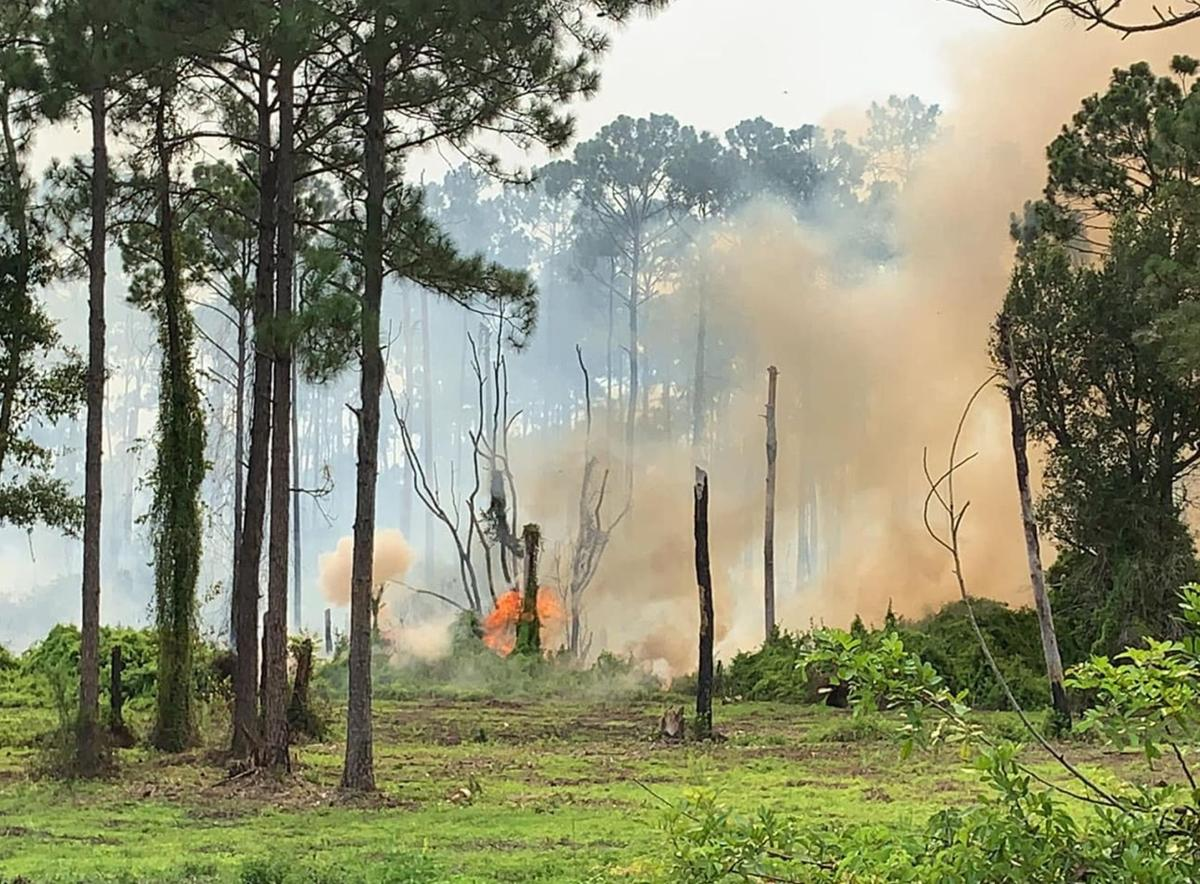 fire in brush