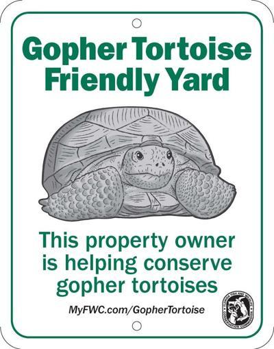 Gopher Tortoise friendly yard