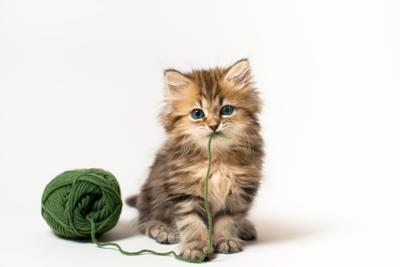 Kitten file photo