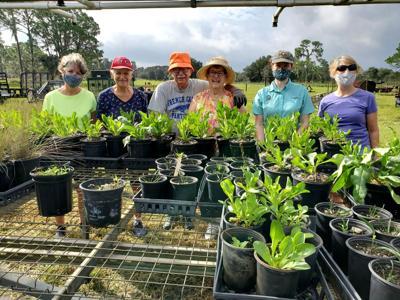 LP Garden Club Acorn Project part 7