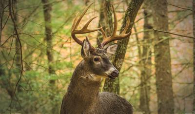 VT F&W urges hunters to help keep deer healthy