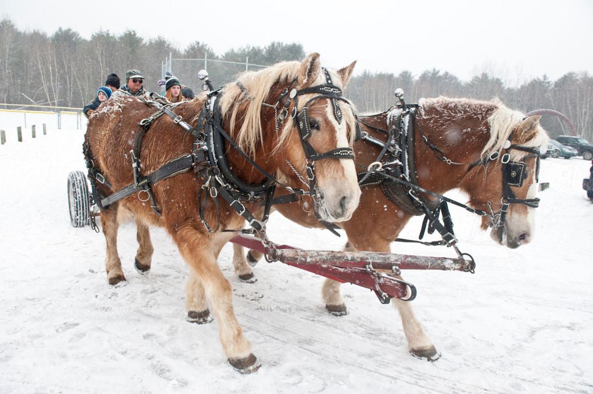 Winter Festival horses