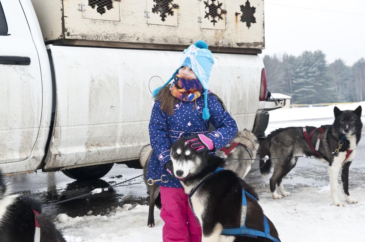 Winter Festival sled dog