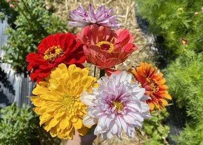 Cut-your-own flowers Full Belly Farm