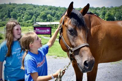 Erin Longworth Horses
