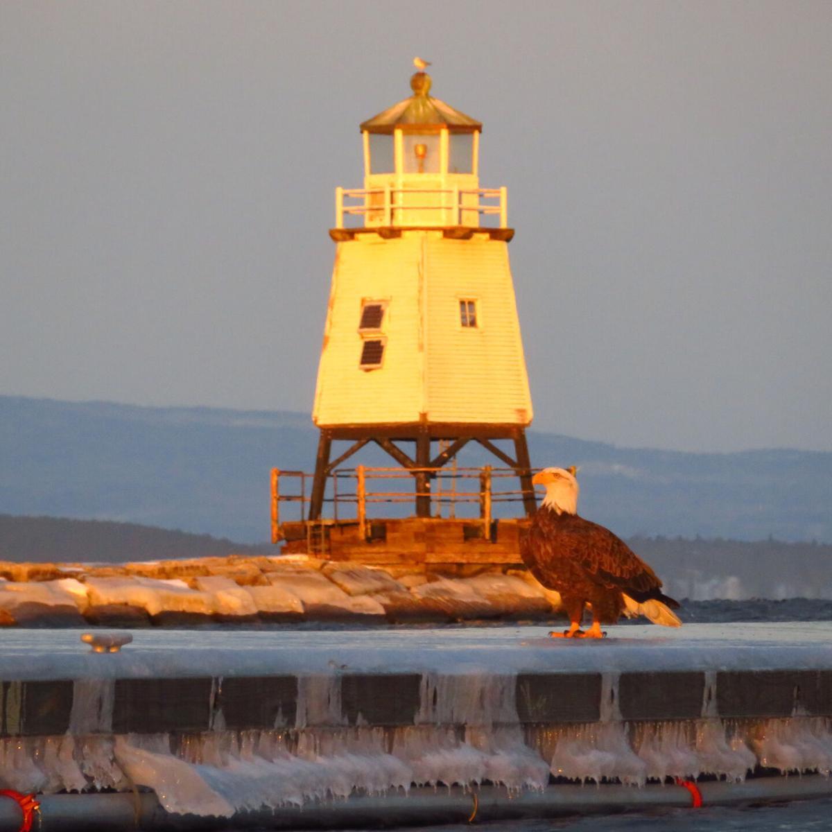 bald eagle lighthouse.JPEG