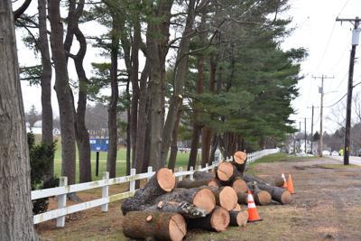 Milton Academy white pine border