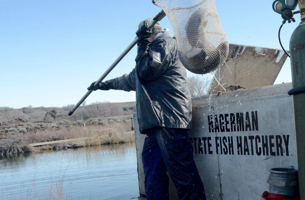 Hagerman Fish Hatchery