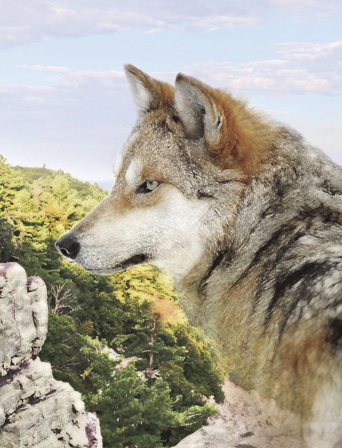 wolves intro image 3 MKE.tif