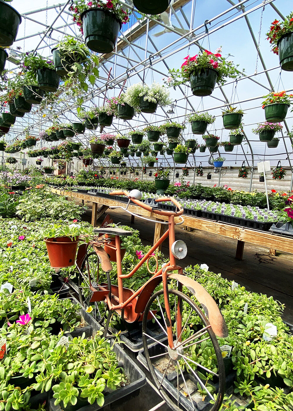 Business is blooming at local greenhouses