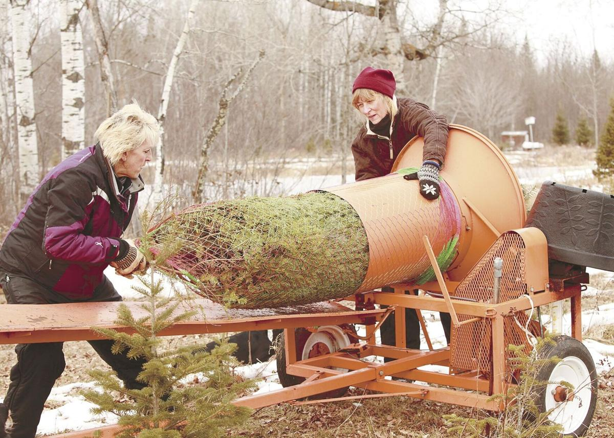Local tree farms steeped in history