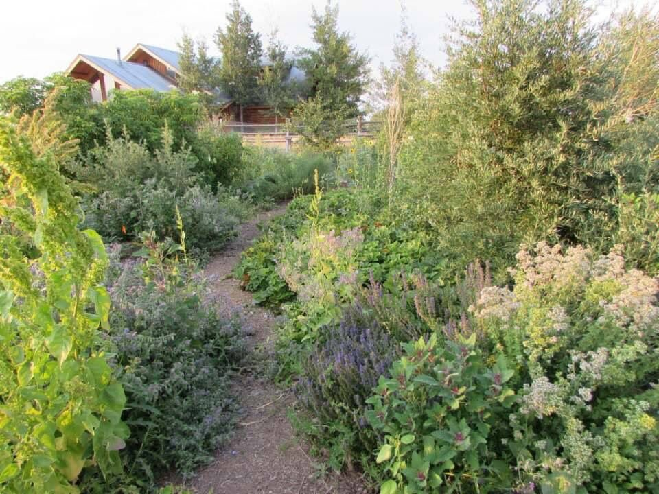 Grow a forest of food