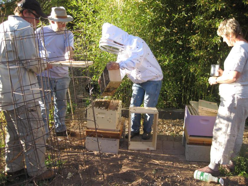 Moab beekeepers face mites, colony collapse